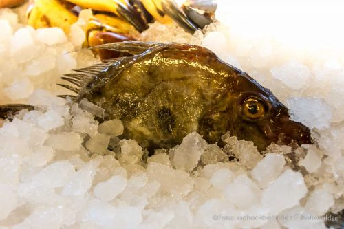 FishDK2014_aadhoc-media-ThomasRohwedder_115_IMG_5551